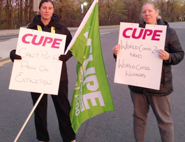CUPE 1600 reaches tentative agreement with Toronto Zoo