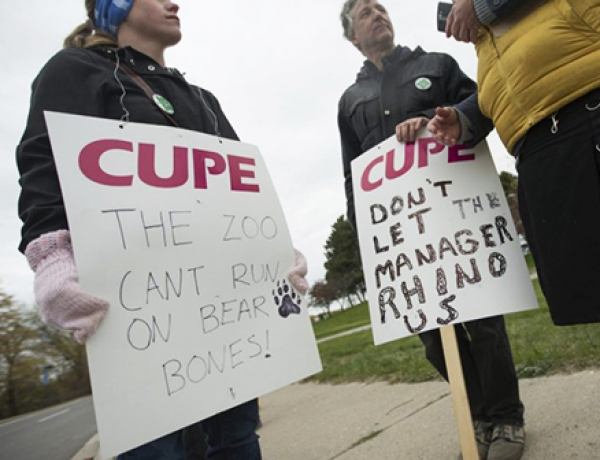 Toronto Zoo, striking staff head back to the table
